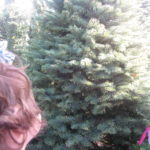 holiday_christmas_tree