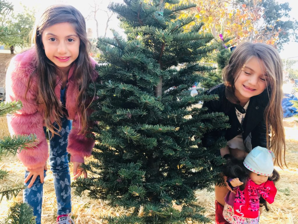 family-holiday-traditions-new-tree-christmas
